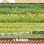 春季農作物長新芽 麻雀群聚報春暖  2020-04-10 Rukai IPCF-TITV 原文會 原視族語新聞