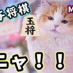 【ランチ将棋】視聴者対局🍙ルーレットで戦型を決めます^^【ランチ将棋】