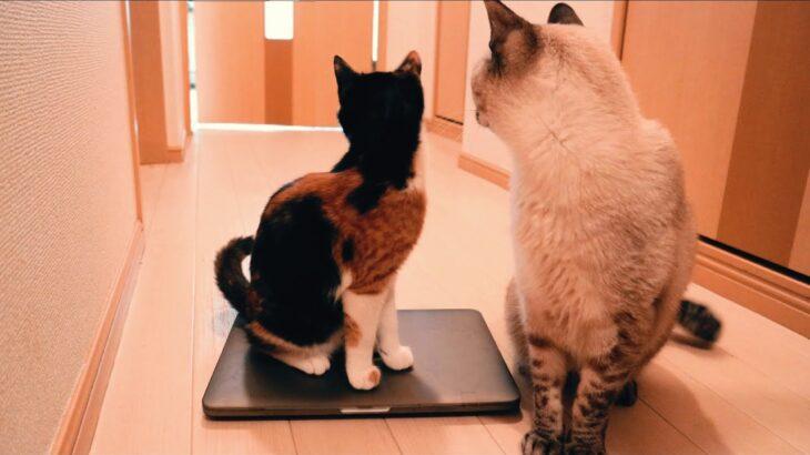 猫ルーレット【汚部屋とおっさんと猫と日常81】