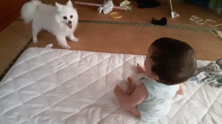 犬ルーレットと赤ちゃん